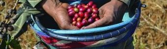 Colombian coffee farmers regional innovation policy